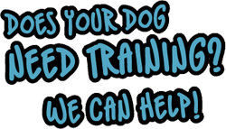 Does Your Dog Need Training? We Can Help!